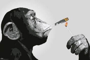 Steez - Smoking Chimp