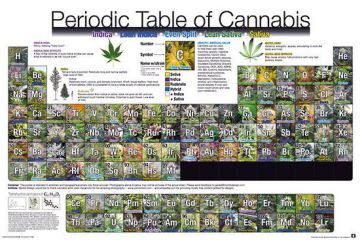Periodic Table Of Canabis