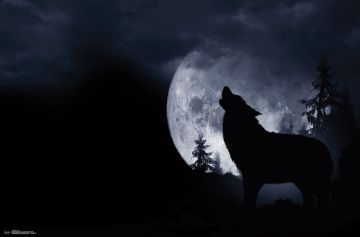 WOLF - HOWLING AT THE MOON