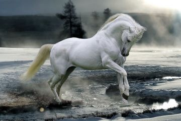 BOB LANGRISH - HORSE SNOW