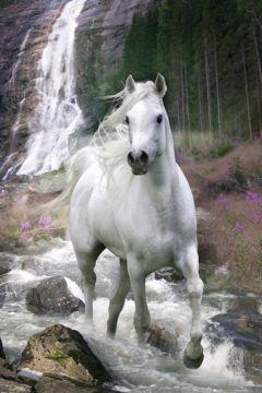 HORSE - WATERFALL