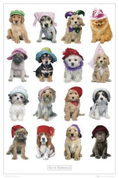 KEITH KIMBERLIN - DOG IN HATS