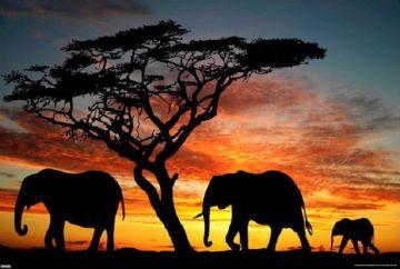 Elephants - African Sunset