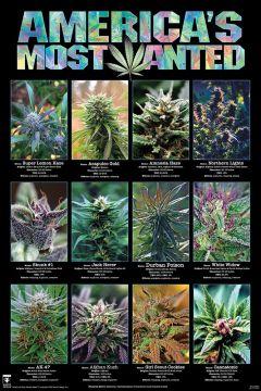Americas Most Wanted - Marijuana